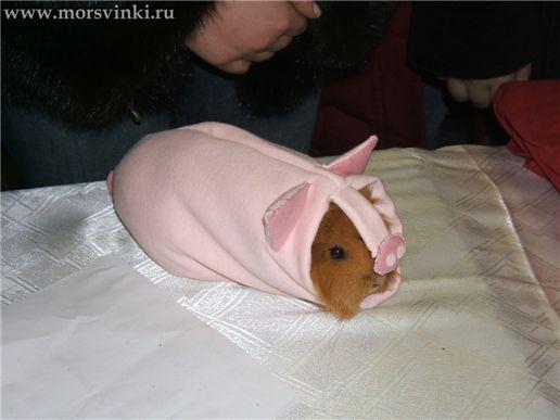 Одежда Для Морских Свинок